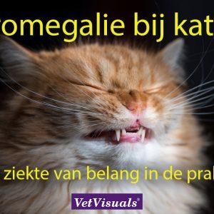 Acromegalie bij katten