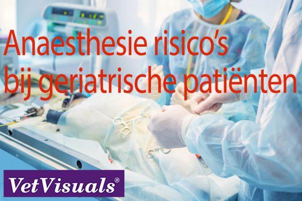 geriatrische patiënt hond kat anesthesie risico