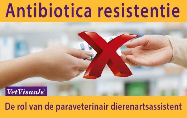 Antibiotica resistentie dierenarts dierenartsassistent