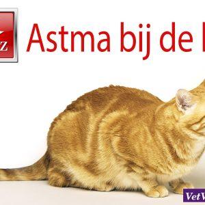 astma kat