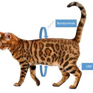 Obesitas bij de hond en kat dierenartsassistent-paraveterinair