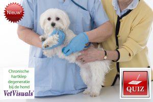 Chronische hartklep degeneratie bij de hond