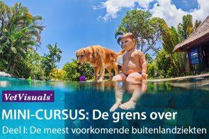 mini-cursus dierenartsassistent, buitenlandziekten, huisdier vakantie