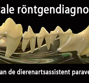 dentale rontgen gebit