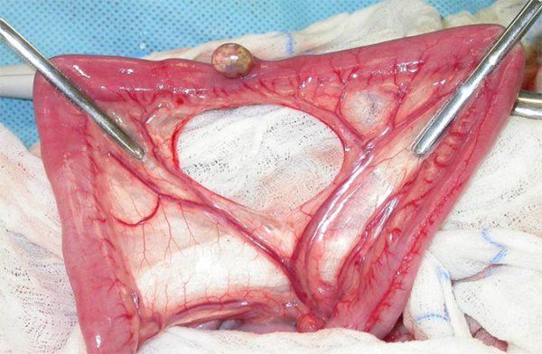 Al zijn bepaalde basisprincipes voor veel dierenartsen gesneden koek, een helder overzicht van alle do's and don'ts is hier op zijn plaats om de punten op de i te zetten voor wat betreft gastro-intestinale chirurgie.