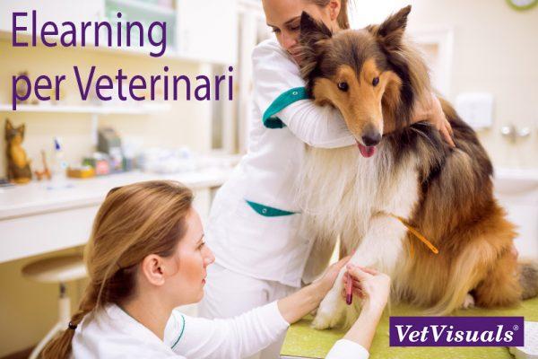 Elearning per Veterinari