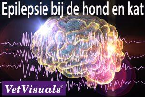 epilepsie hond kat