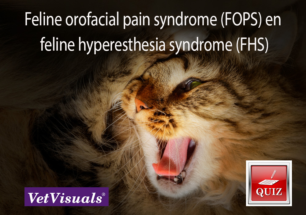 Feline orofacial pain syndrome (FOPS) en feline hyperesthesia syndrome (FHS)