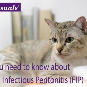 Feline Infectious Peritonitis FIP