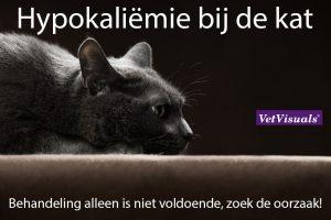 hypokaliëmie bij de kat