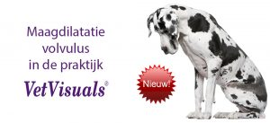 Maagdilatatie volvulus hond dierenarts