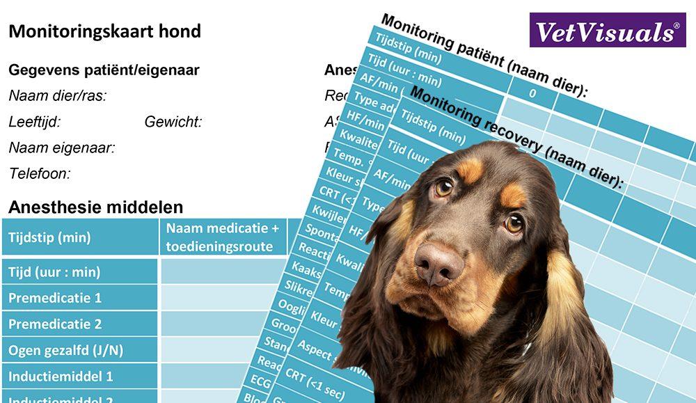 anesthesie monitoringskaar dierenarts dierenartsassistent