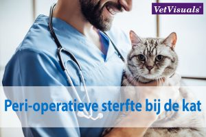 Peri-operatieve sterfte bij de kat