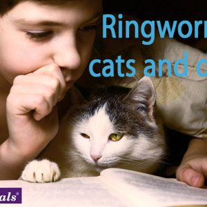 ringworm cats dogs