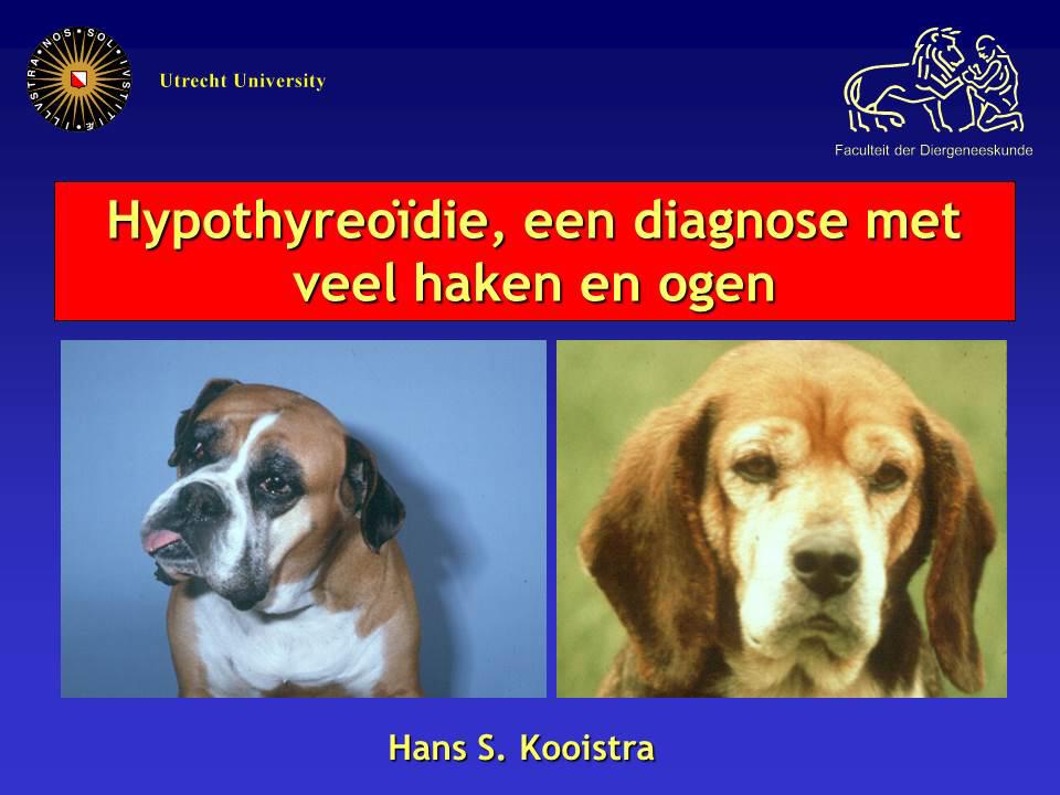 Hypothyreoïdie bij de hond