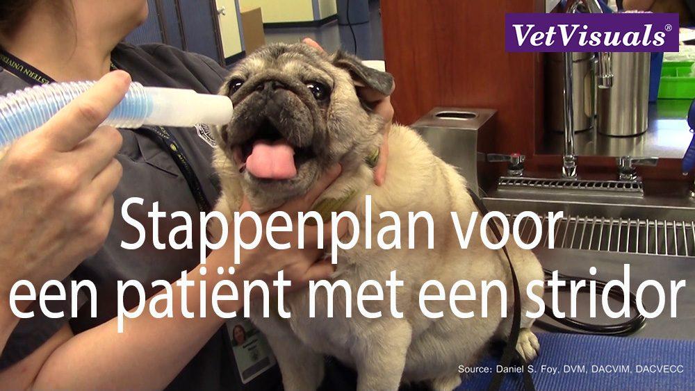 patiënt met een stridor