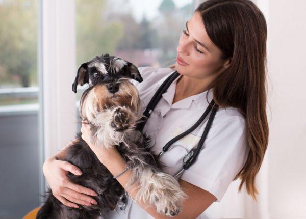 Status epilepticus bij de hond