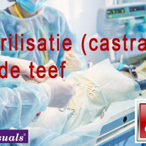 Sterilisatie-castratie-bij-de-teef
