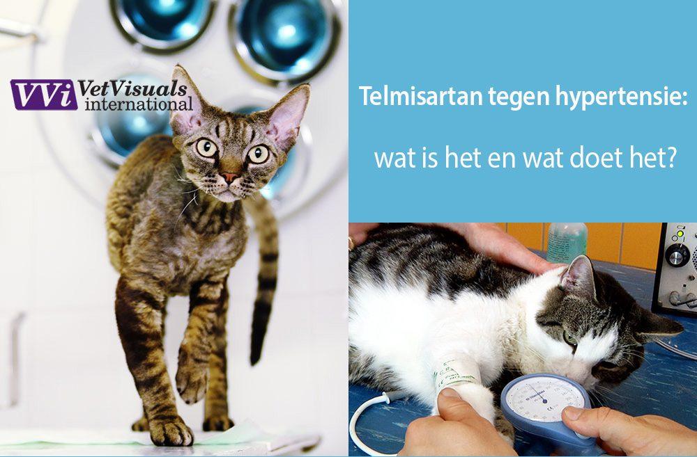 telmisatan hypertensie bloeddruk kat