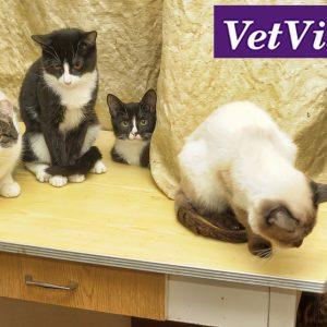 multi-cat huishouden