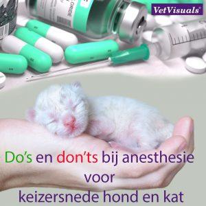 keizersnede hond, anesthesie, ASA-1, anesthesieprotocol