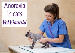 anorexia in cats