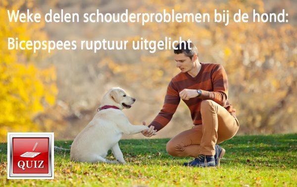 Weke delen schouderproblemen bij de hond: Bicepspees ruptuur uitgelicht