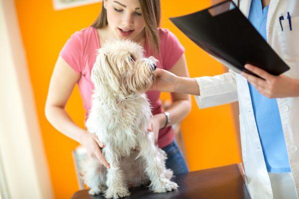 elearning veterinari