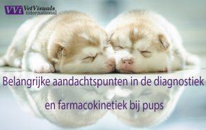 diagnostiek en farmacokinetiek bij pups