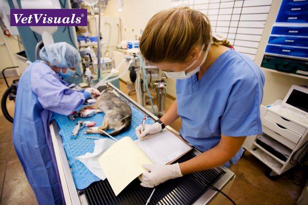 elearning dierenarts anesthesie