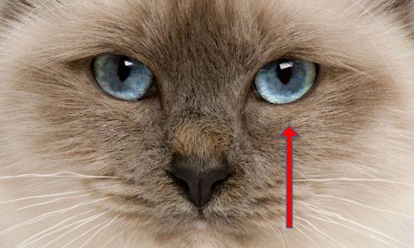 oogonderzoek kat