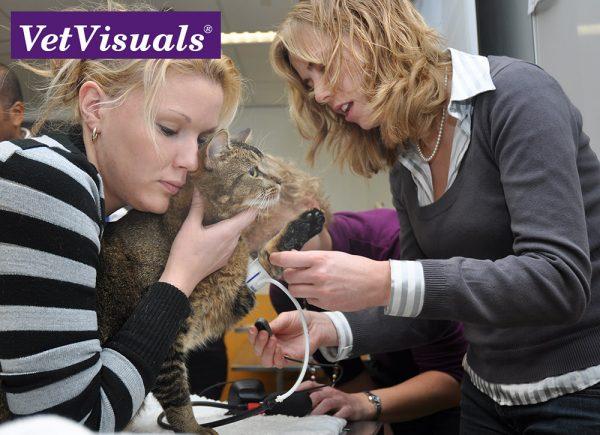 dierenarts veterinaire nascholing cursus cpd online bloeddruk kat hypertensie dierenartsassistent