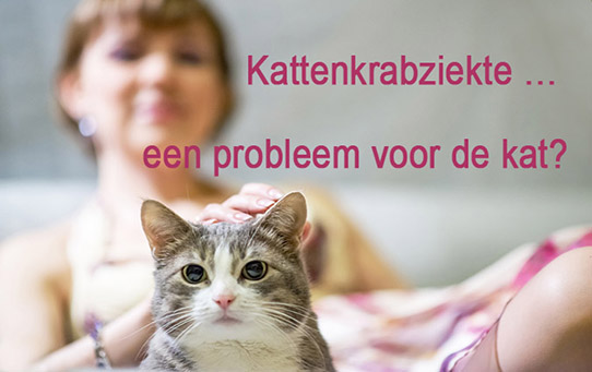 kattenkrabziekte