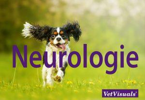 neurologie neurologisch onderzoek dierenarts
