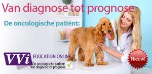 Oncologie dierenarts