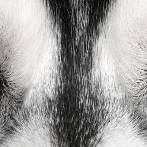 oog dierenarts oogonderzoek hond kat