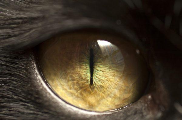 oogonderzoek hond kat
