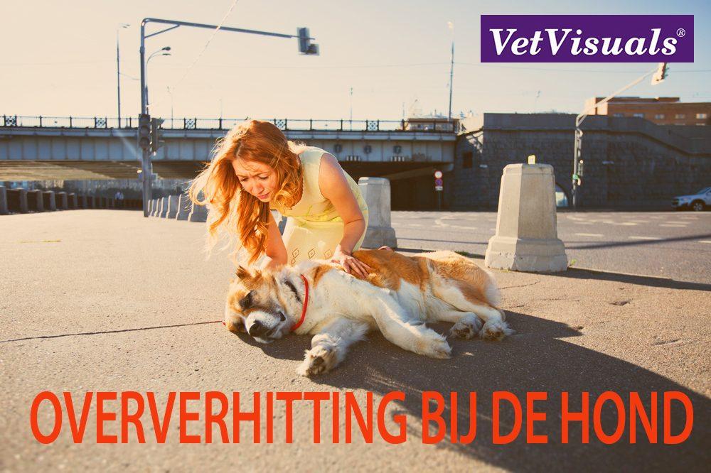 oververhitting hond
