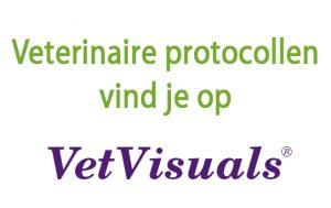 veterinaire protocollen vetvisuals dierenarts