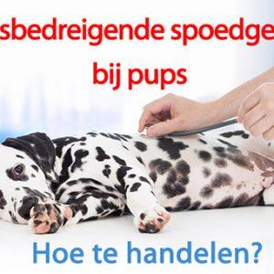 spoed, pup