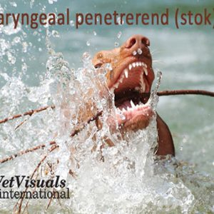 Oropharyngeaal penetrerend (stok)trauma