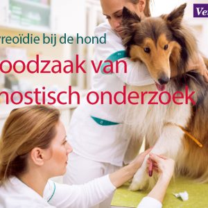 hypothyreoïdie hond