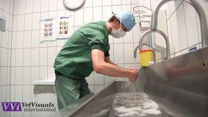 spoed patient dierenarts
