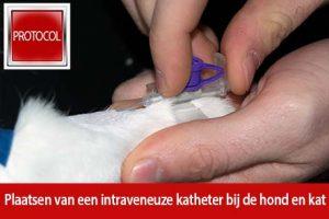 braunule intraveneuze katheter