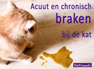 braken kat