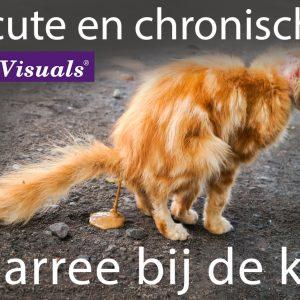 diarree bij de kat