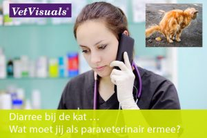 diarree bij de kat paraveterinair