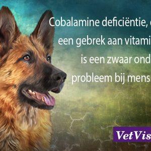vitamine B12 hond