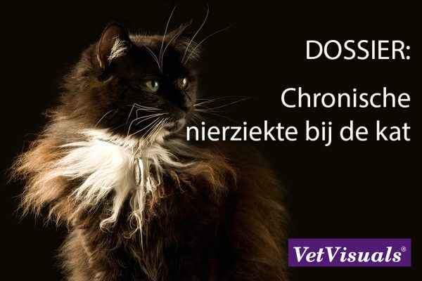 Chronische nierziekte kat