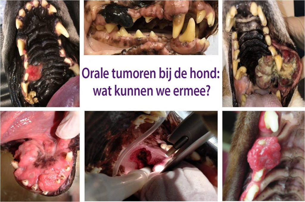 orale tumoren hond